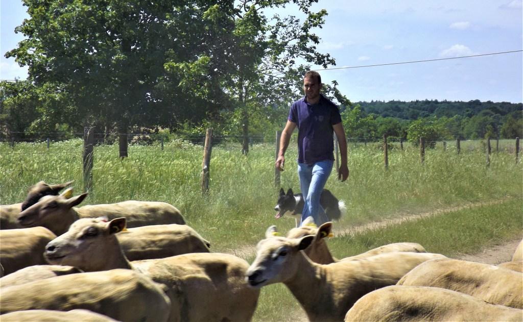 Découvrez le portrait d'un éleveur d'agneau qui accompagne ses animaux durant chaque étape de leur vie
