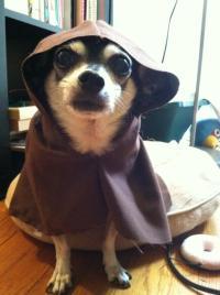 Chihuahua Jedi Robe That I Made : crafts