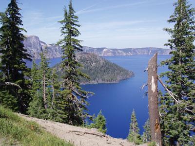 Trees at Crater Lake
