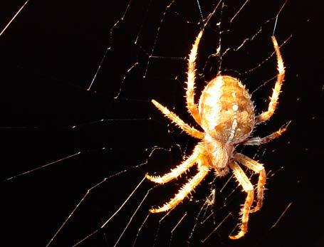 Bob the Spider