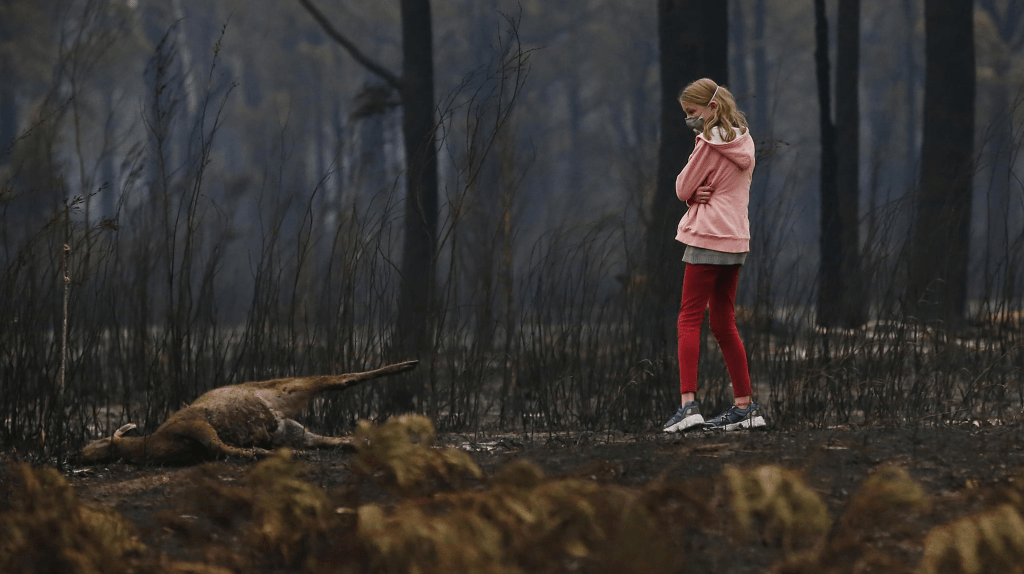 A young girl looks at the burnt body of dead kangaroo at a scorched property in Mallacoota. Credit: News Corp Australia, David Caird