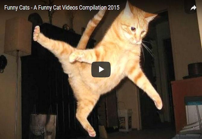 Image of: Dogs Eri Jams Magazine Funny Cat Videos Compilation Jams Magazine