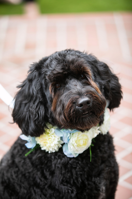 Erika Anderson Designs wedding bouquet on dog