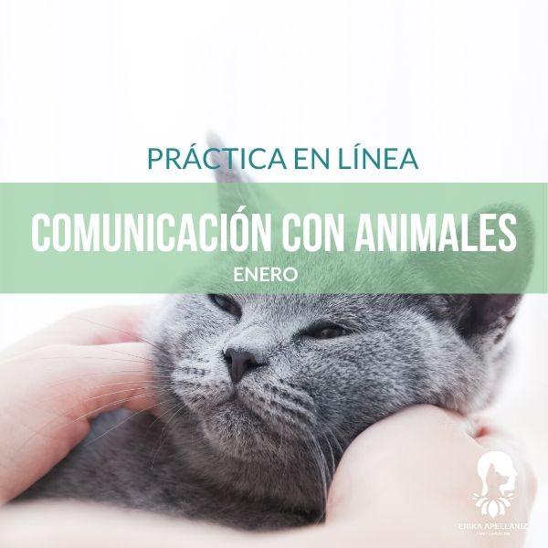 Práctica Comunicación con Animales_Enero