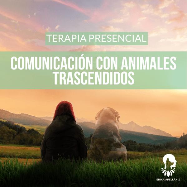 Terapia Presencial Comunicación con Animales Trascendidos