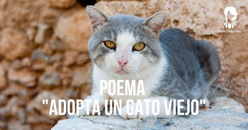 Poema Adopta un gato viejo