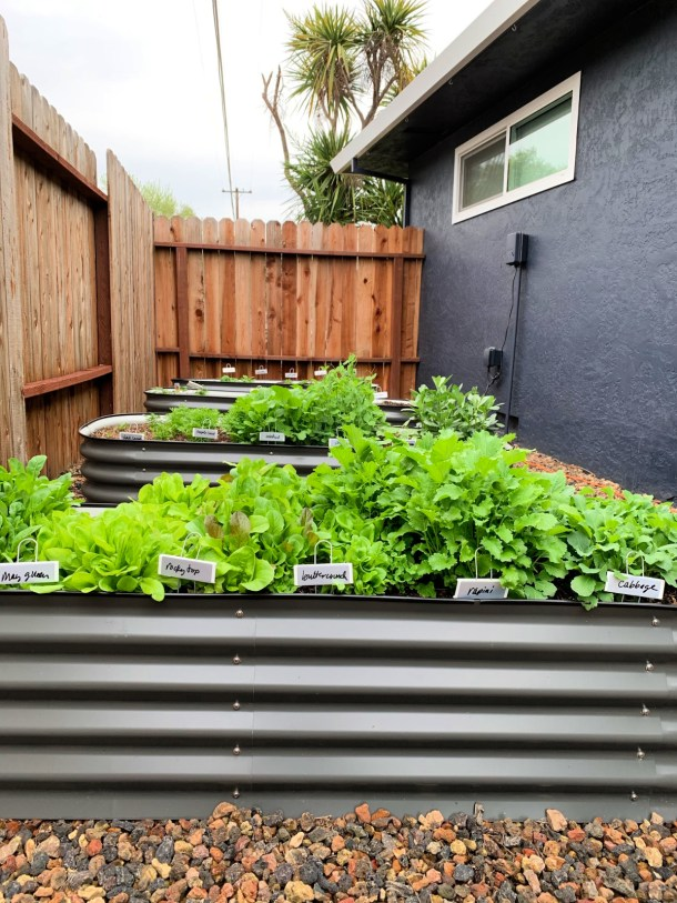 Four raised garden beds with salad greens. next to a dark blue wall.