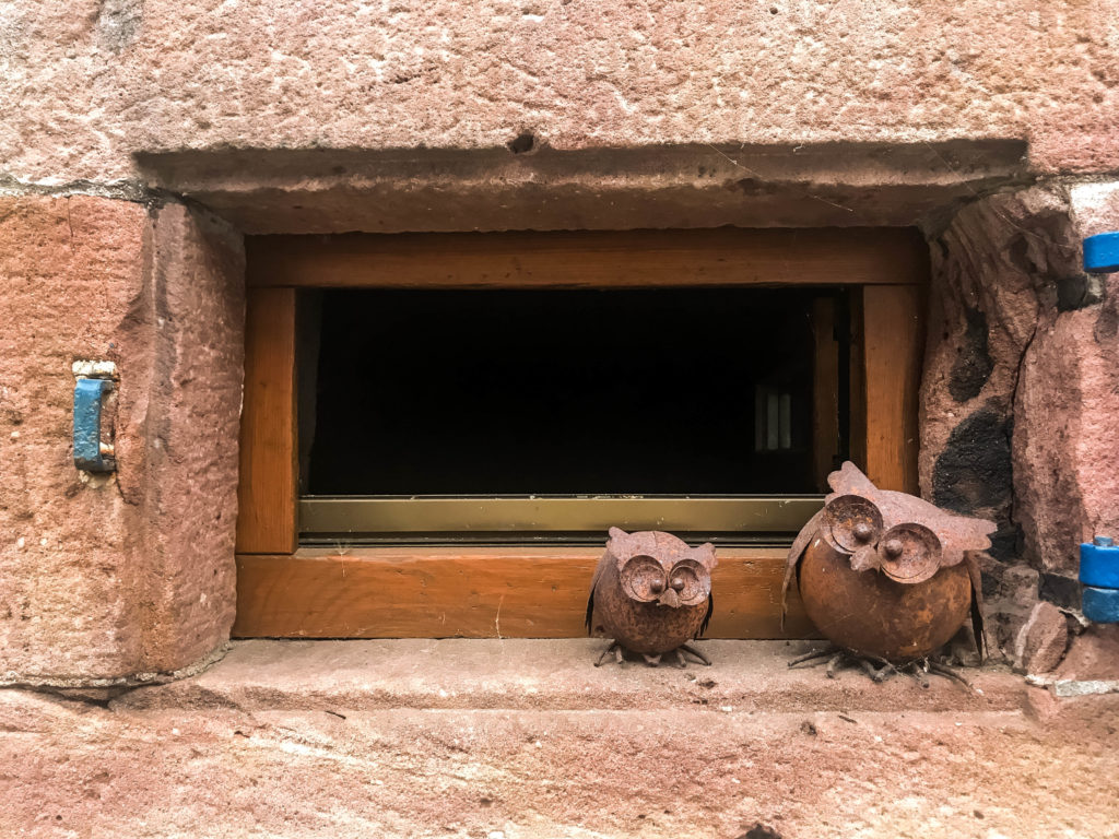 Cute little owls spotted in Schiltach