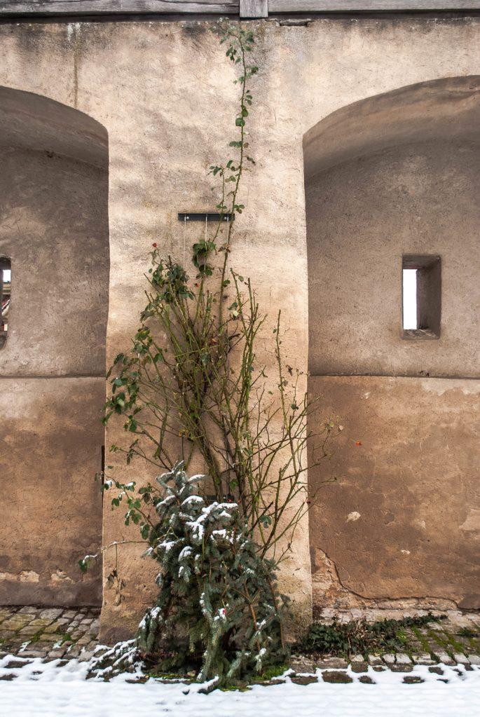 Kloster walls plants
