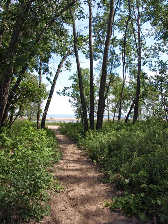 A Path to the Saginaw Bay