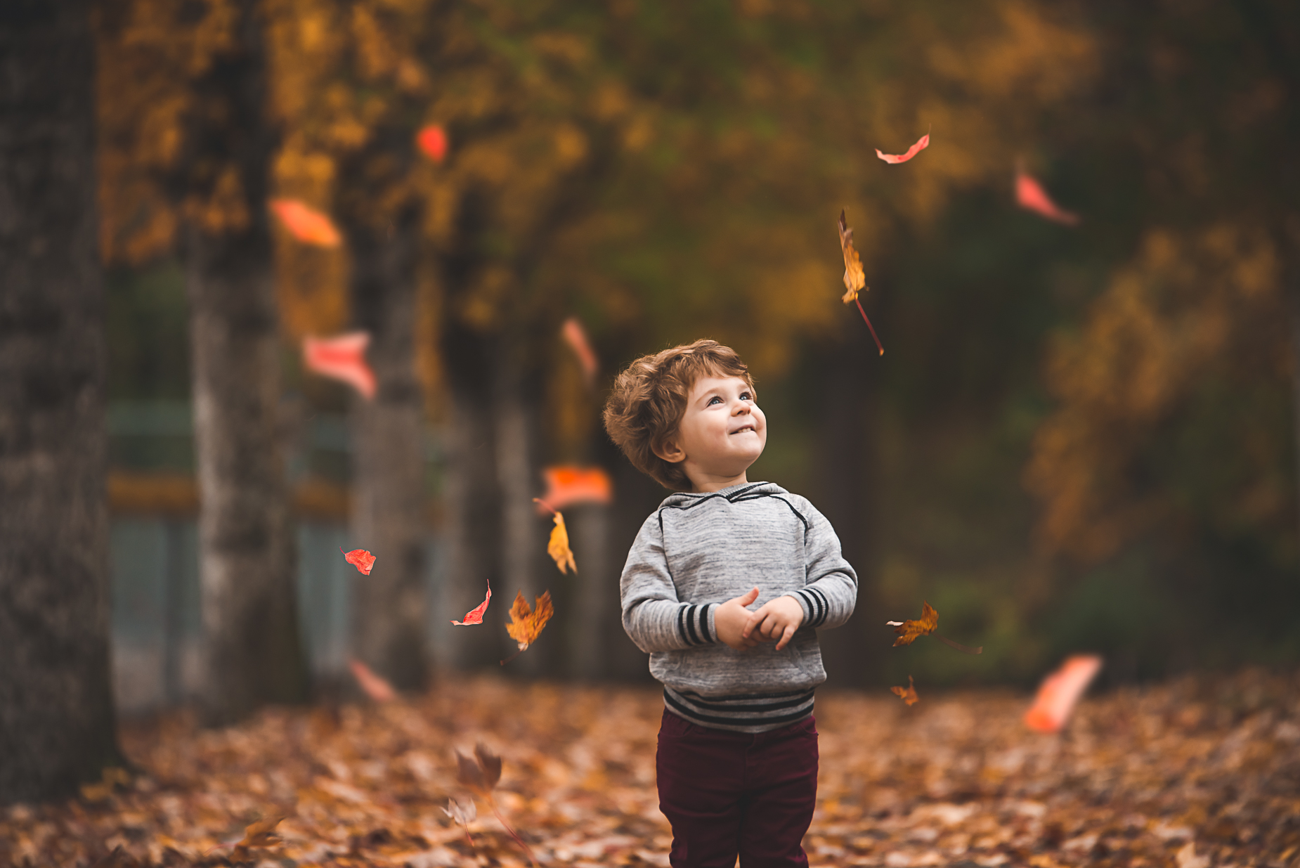 A young boy is smiling at the leaves falling around him by Bellevue Family Photographer
