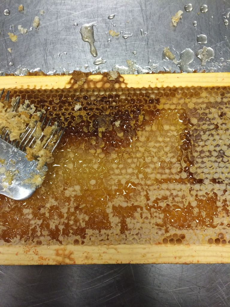 Different nectars from different plants make honey of different hues - here the bees have a few different nectar flows on the same frame.