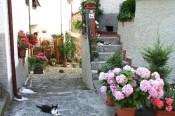Cats in Bagni di Luccajpg