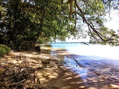 Along Raintree Beach