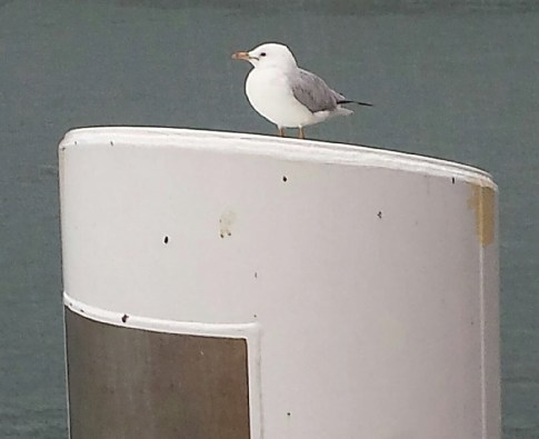 One wet seagull at the ferry wharf