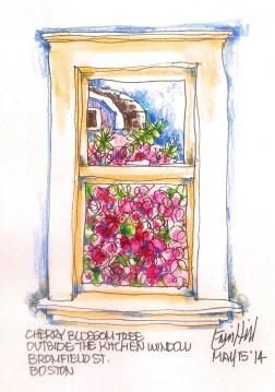 Blossom outside the window