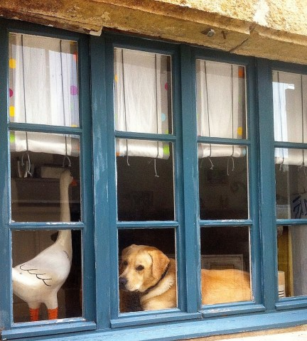 How much is that doggie in the window. Caunes