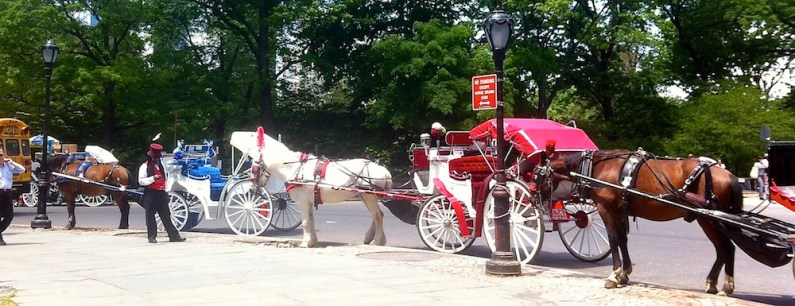 Take a ride round Central Park