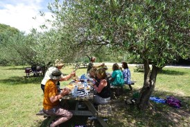 Monday. Picnic lunch under the olive trees.Image