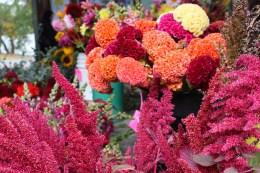 Ithaca Farmers Market flowers