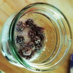 How To Make Blackberry Vodka – Recipe For A Gift