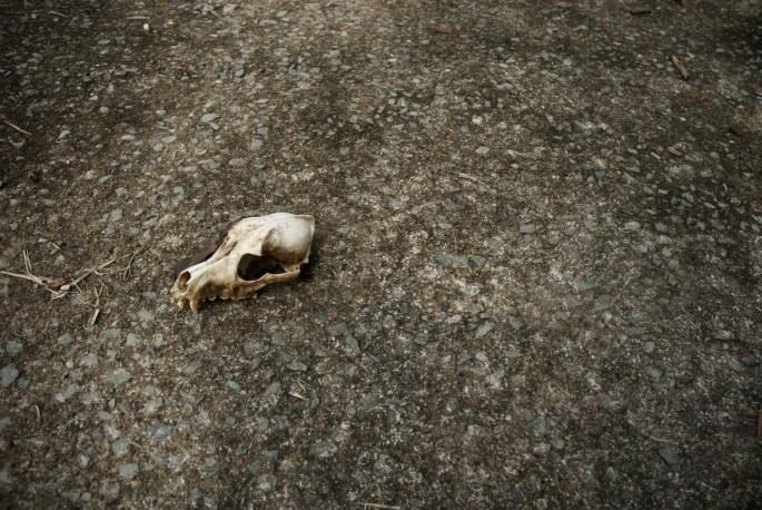 Cat skull of Cat Town, Kuching