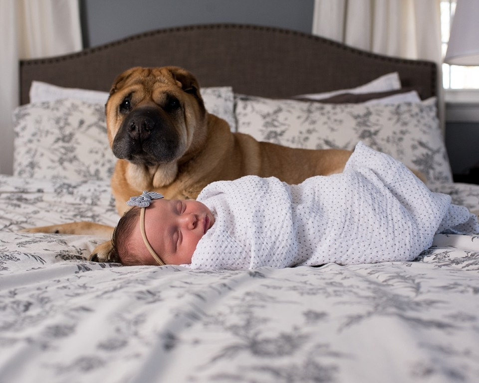 Newborn Session with Baby Girl and dog