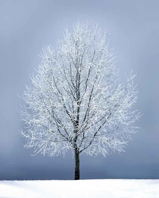 leafless tree under gray sky
