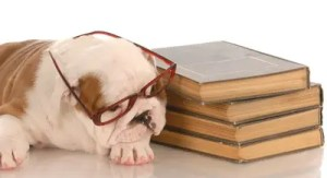 Puppy Pooped from Celebrating National Grammar Day