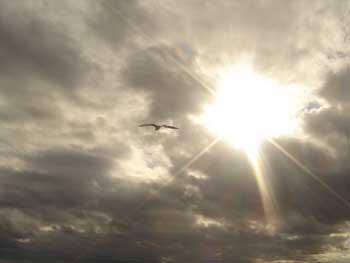 gaviota sobre cielo nublado