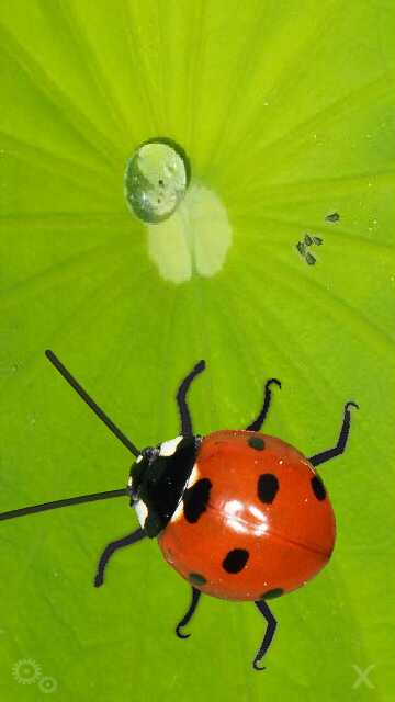 serangga besar by erit07