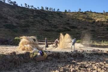Tigray Farmers