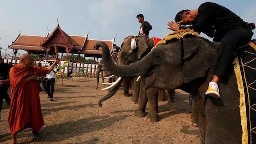 Elefantes recibiendo la bendición en su día