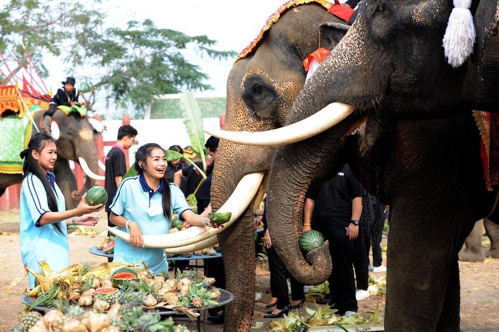 Tailandia celebra hoy el Día del Elefante