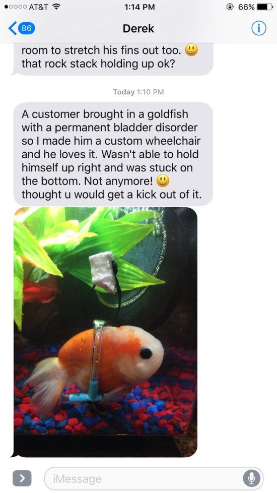 ¿Habías visto un pez dorado con algo así?