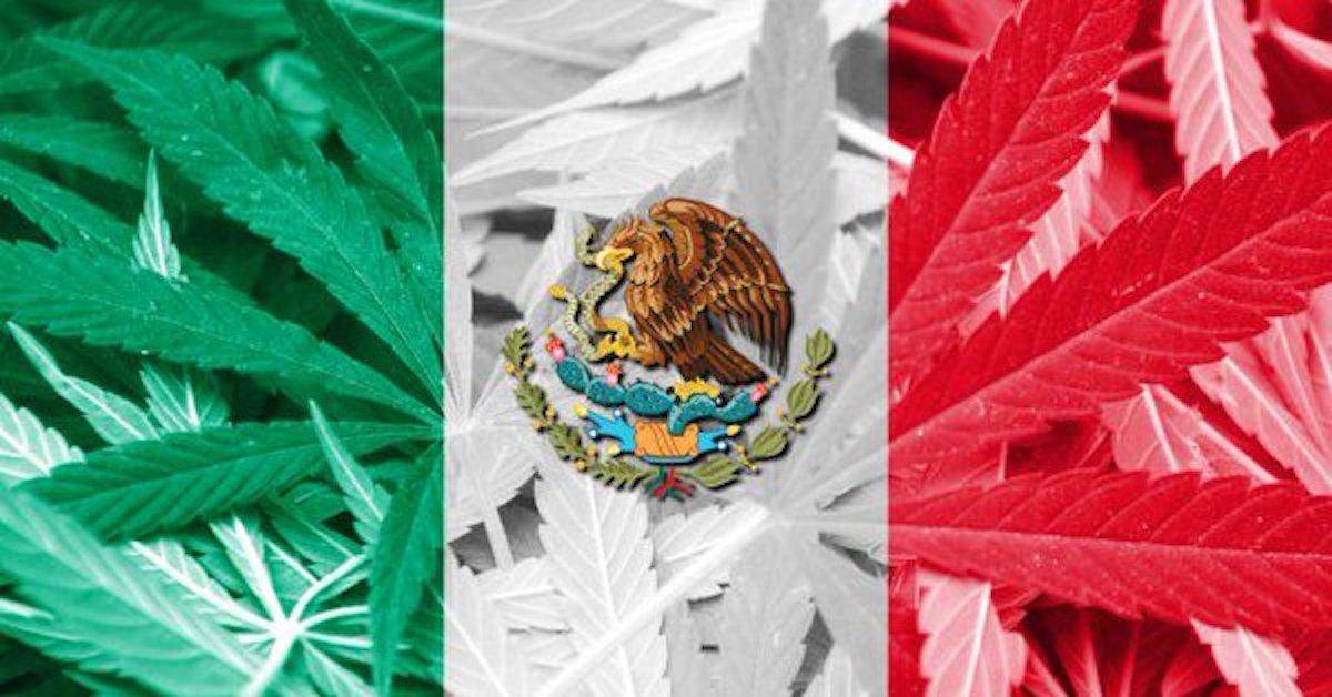 Diputados aprueban el uso de la mariguana medicinal en México