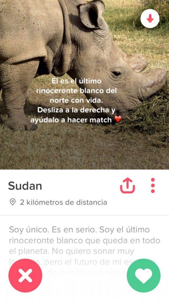 Sudán, el último rinoceronte blanco del norte macho en Tinder