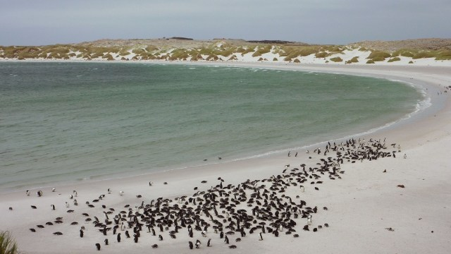 Pingüinos viviendo en una playa minada en las islas Malvinas