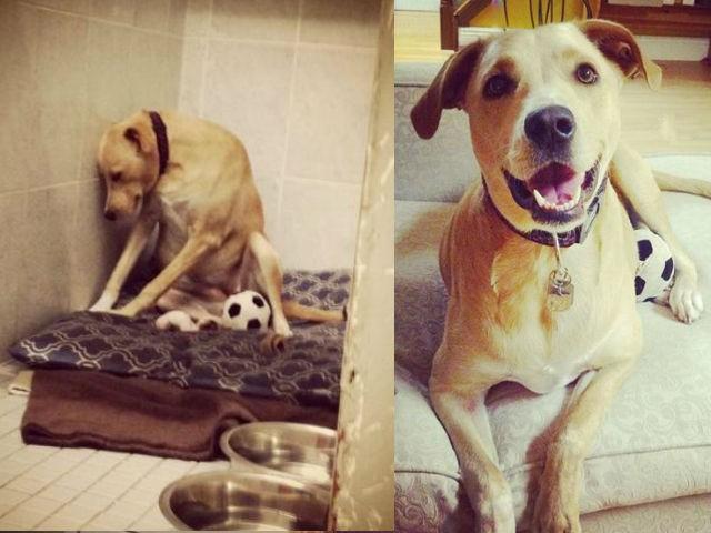 Lana antes y después de ser adoptada