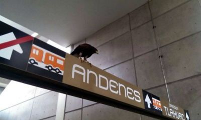 El metro nopalera recibió la señal sagrada