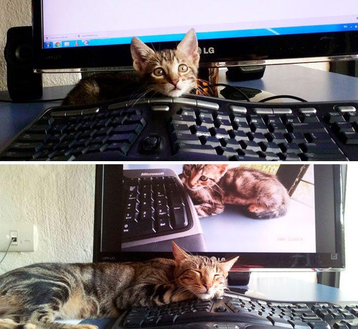 Gatito antes y después frente al mismo teclado