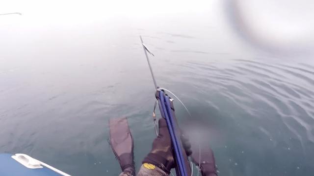 Buzo graba encuentro cercano con tiburón blanco grabado con una GoPro