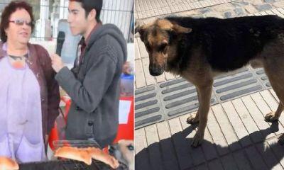 perrito roba empanada y se vuelve viral