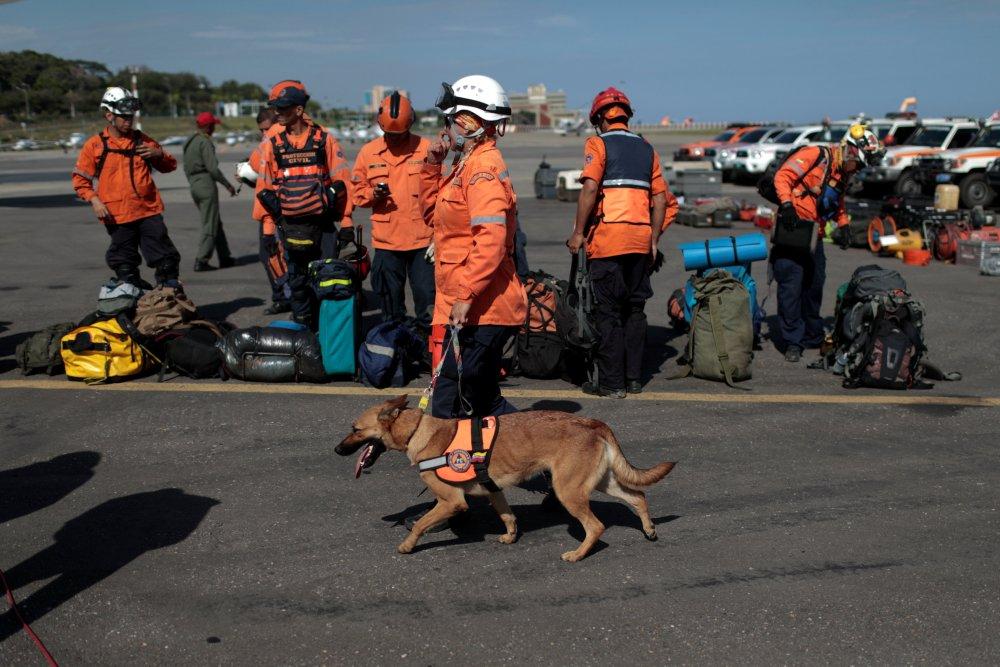 Binomio canino venezolano