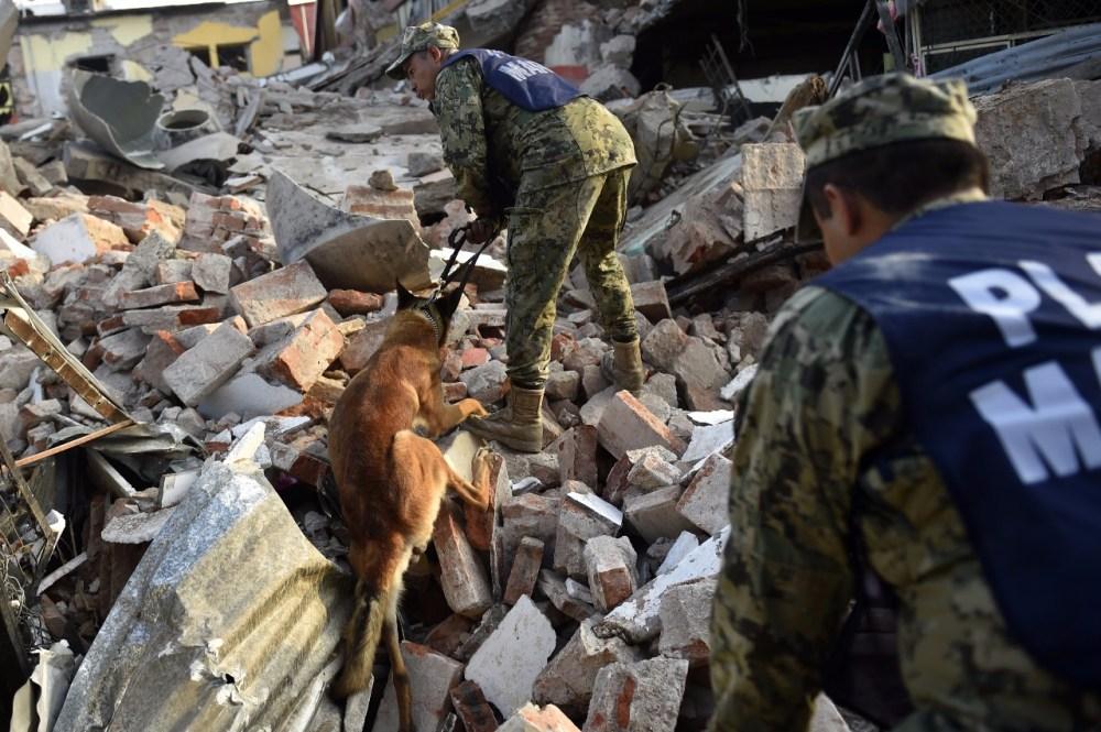 Perros rescatistas en Juchitán