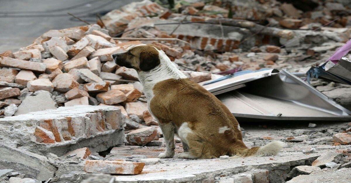 Mascotas afectadas por el sismo necesitan ayuda