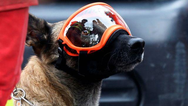 Binomio Canino se perpar para entrar a los escombros, CDMX