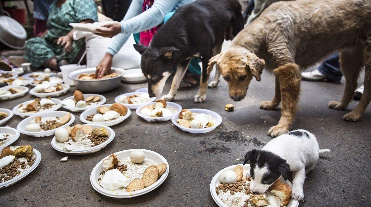 Alumnos de veterinaria de la UNAM han curado a 100 perros lastimados por el temblor