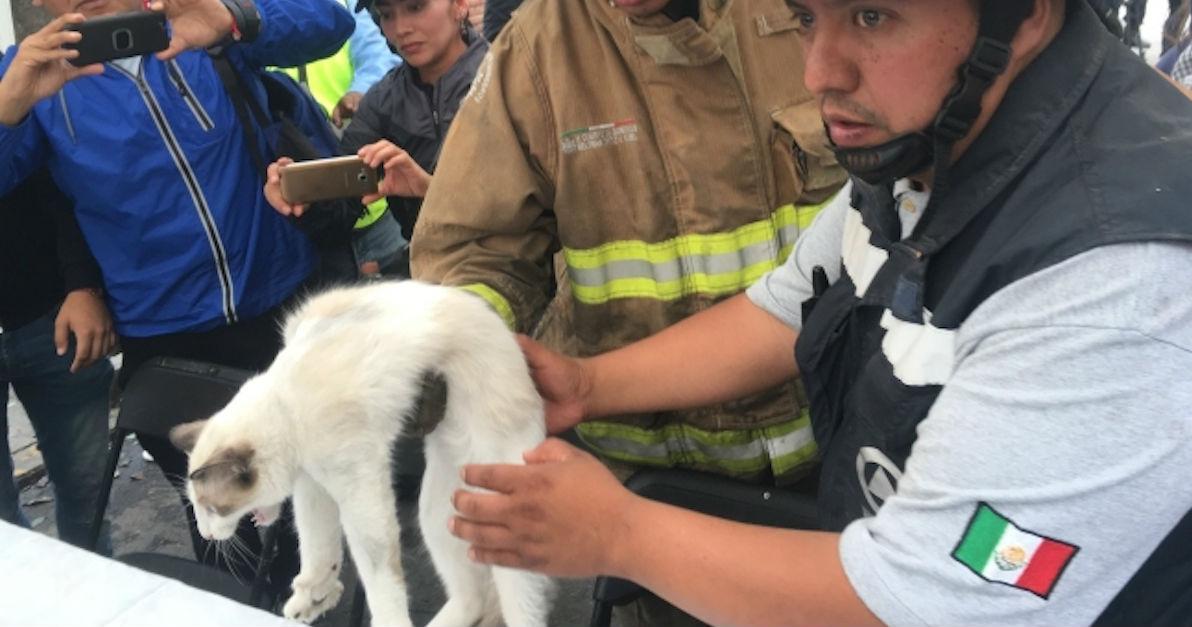 Rescate gatito Lindavista