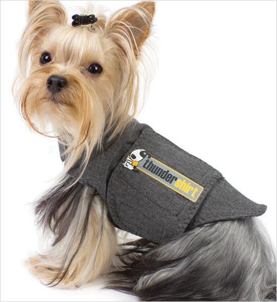 Un perrito usando una Thundershirt para regular su respiración